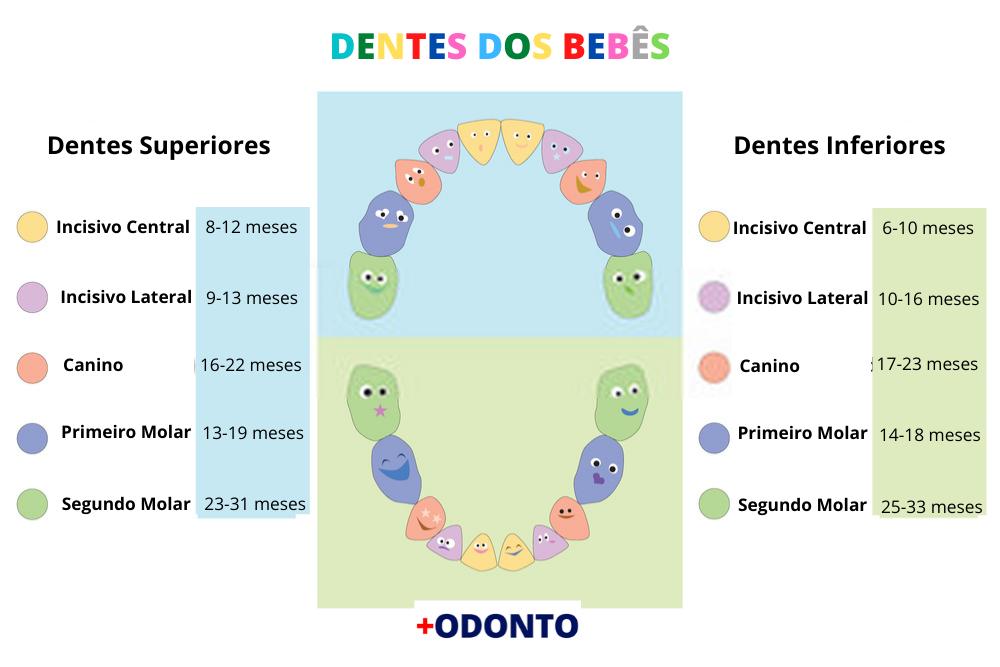 Nome dos Dentes dos bebes e Quando Nascem