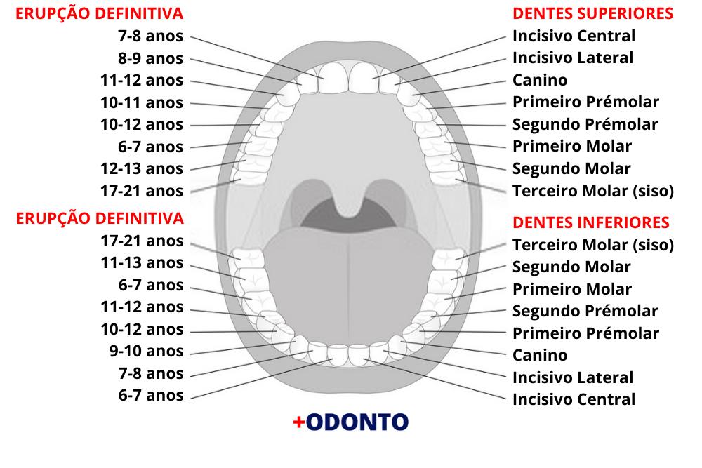 Nome dos Dentes e Quando Nascem