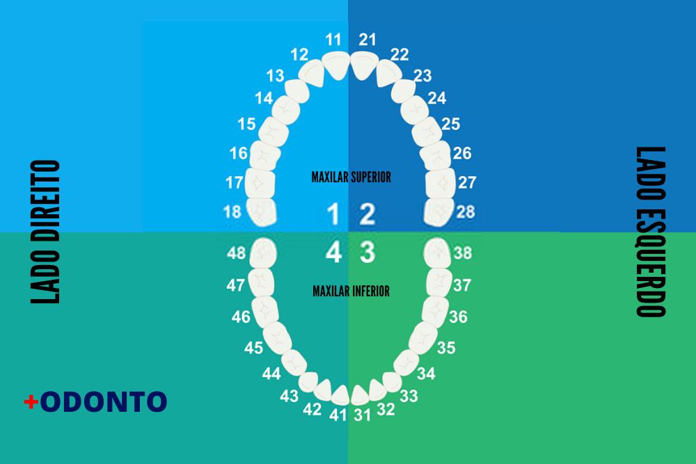 numeração dos dentes